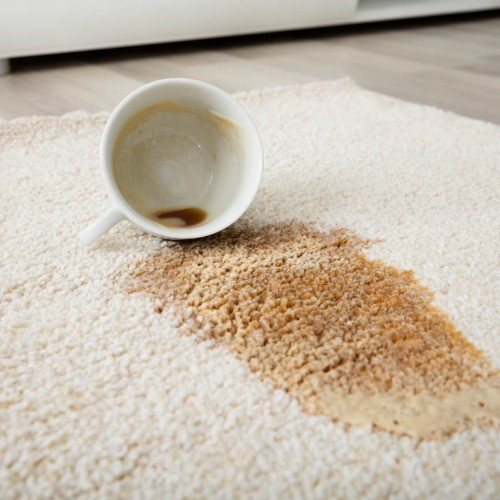 Carpet cleaning tips | Masters And Petersens Flooring